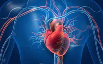 Herzmuskelentzündung durch Sport und Erkältung