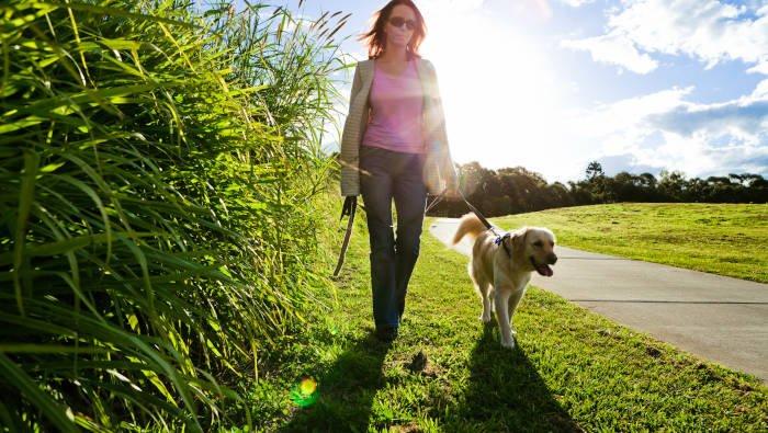 Abnehmen Sport Fitness - Hunde-Gassirunden liefern alles das.